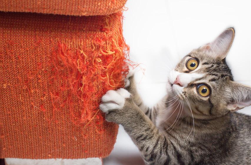 Sofas Und Katzen Wie Ihr Sofa Nicht Zum Kratzbaum Wird Sofa